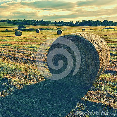 Free Hay Bail Harvesting In Golden Field Landscape. Summer Farm Scenery With Haystack On The Background Of Beautiful Sunset. Stock Image - 76692141
