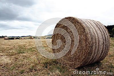 Hay Bale