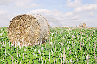 Hay Bale on Farmland