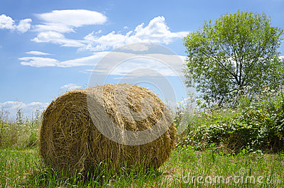 Hay bale out in the field