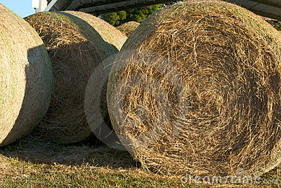 Hay bale rolls closeup