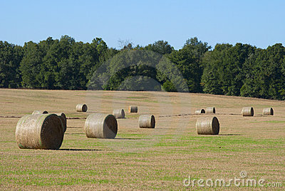 Hay bale rolls in a field