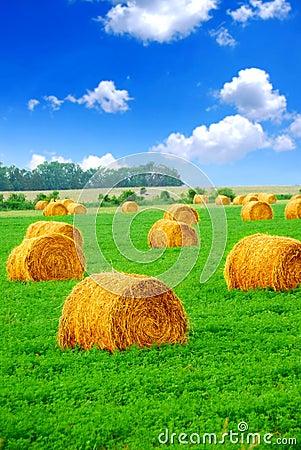 Free Hay Bales Stock Photos - 2194733