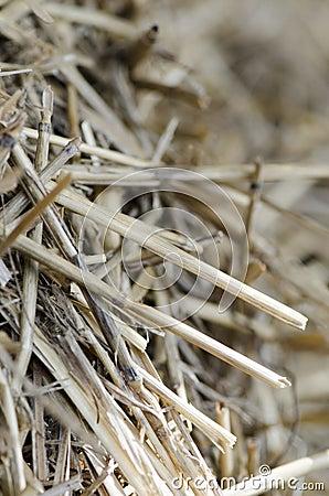 Free Hay Bales Stock Photography - 42228302
