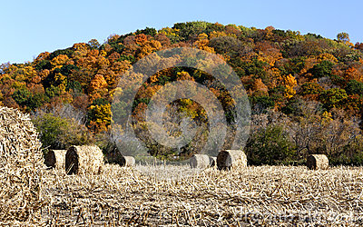 Hay bales and fall color