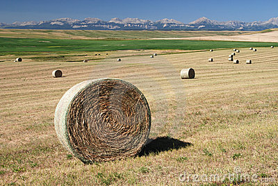 Hay Bales on Farmland