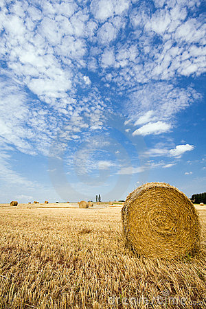 Hay bales on a field in summer
