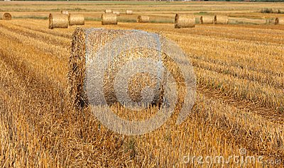 hay bales on filed