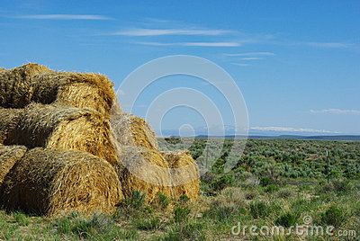 Hay Bales in Montana