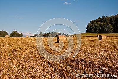 Hay bundles