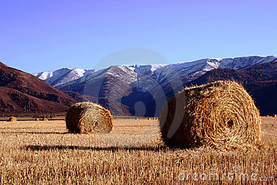 Hay in the field with mountains on a background