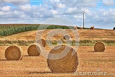 Hay harvest time