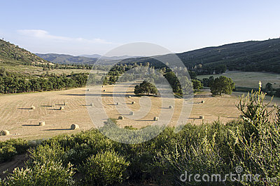 Hay Harvest in the West