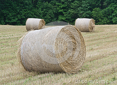 Hay Rolls in Huntingtown, Maryland