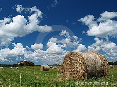 Hay rolls ona Summer Day