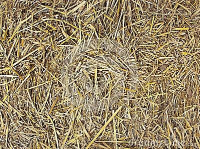 hay seamless background royalty free stock image image