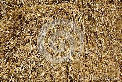 Hay Stack; close-up