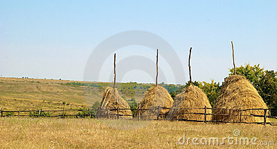 Hay stacks in countryside