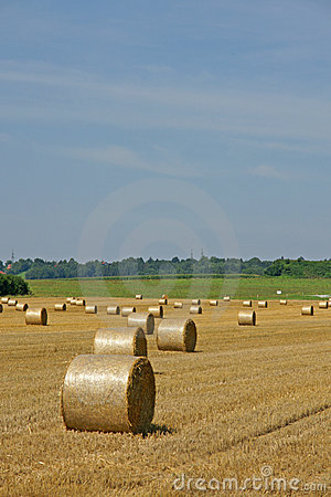 Hayfield and bales