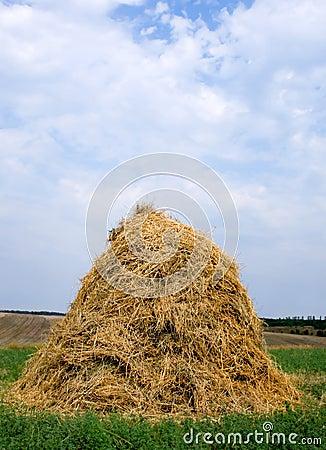Haystack hay straw