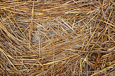 Haystack Texture Background