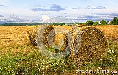 Haystacks after harvest
