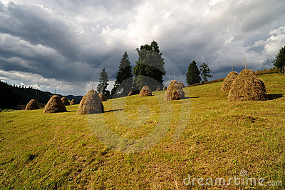 Haystacks in the meadow