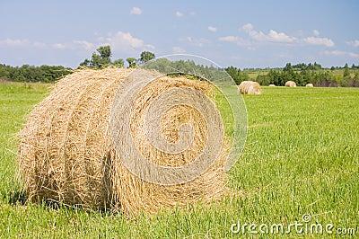 Haystacks harvest against the skies