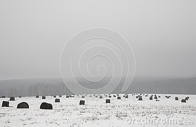 Haystacks on the meadow