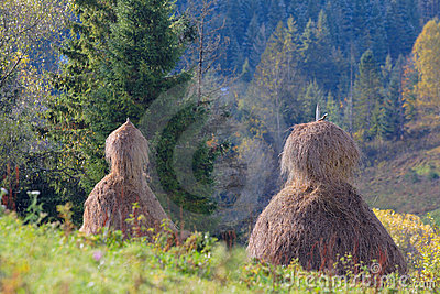 Haystacks in mountain field in Ukraine