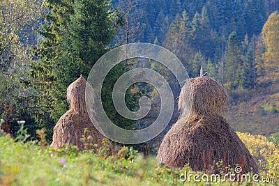 Haystacks in mountain field in Ukraine
