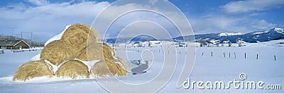 Haystacks and Snow