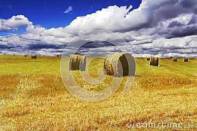 Haystacks on yellow field