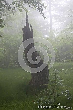 Haze forest