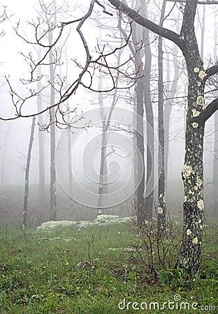 Haze Tree V