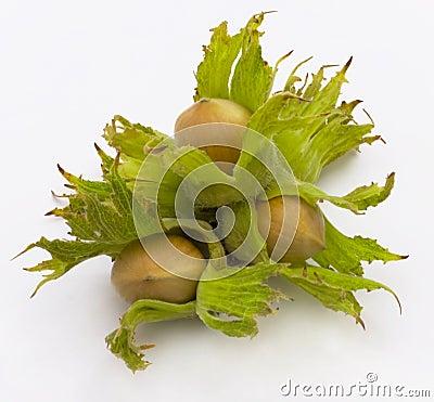 Free Hazel, Nut Stock Photography - 12945002