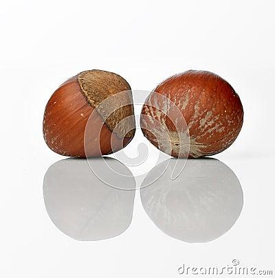 Free Hazel Nut Stock Images - 3509914