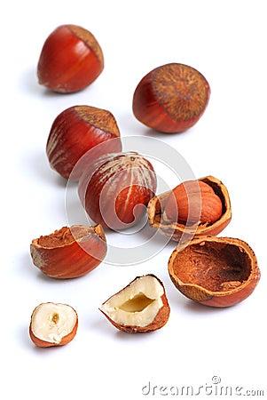 Hazelnut - 3