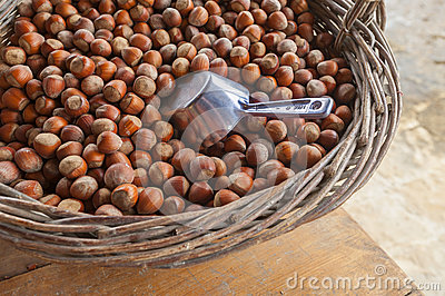 Hazelnut or filberts
