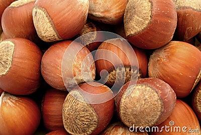 Hazelnut nut nuts food