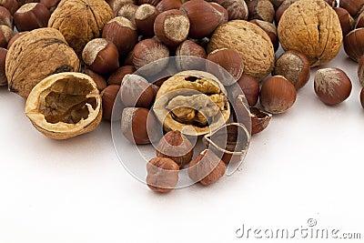 Hazelnut and walnut group