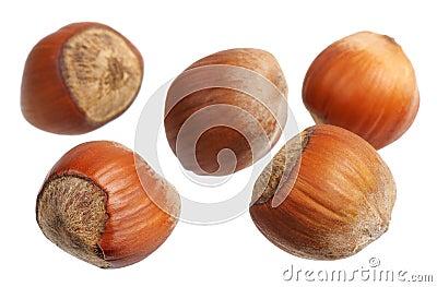 Hazelnuts, isolated