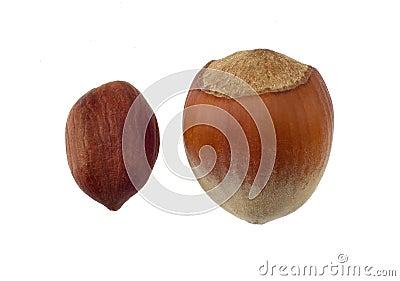 Hazelnuts macro