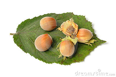 Hazelnuts on White