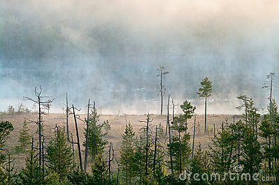 Hazy distance in forest bog
