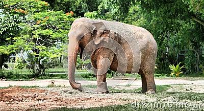 HDR Elephant