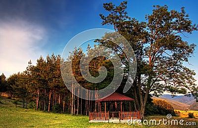 HDR forest landscape