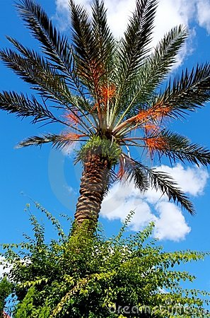 HDR Palm Tree