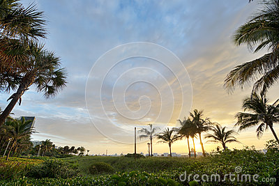 HDR of Palm Trees in Miami Beach