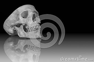 HDR Skull on Glass